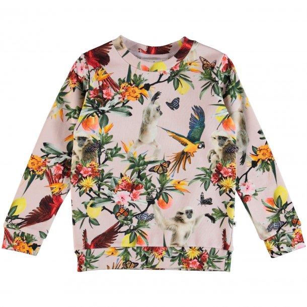 MOLO - Sweatshirt med fugle og aber. Mara
